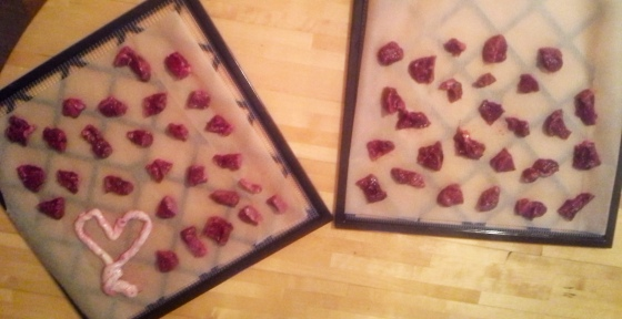 placenta and umbilical chord ready to dry